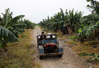 A worker drives through a banana plantation operated by a Chinese company in the province of Bokeo in Laos April 25, 2017. Reuters Photo/Jorge Silva