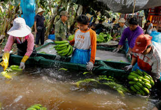 Workers wash bananas in a packing line inside a banana plantation operated by a Chinese company in the province of Bokeo, Laos April 25, 2017. Reuters Photo/Jorge Silva