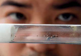 Chris Chan, an ant collector, holds up a queen ant at a house he rented to keep his ants in Johor Bahru, Malaysia, April 19, 2017. Reuters Photo/Edgar Su