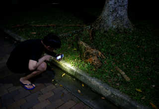Dave Thong, 20, looks at a trail of ants at a park in Singapore, May 10, 2017. Reuters Photo/Edgar Su