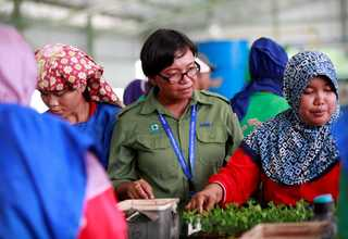 Kerinci Central Nursery 2 functions as RAPP's 'tree factory' and employs a significant number of Pangkalan Kerinci residents. (Photo courtesy of RAPP)