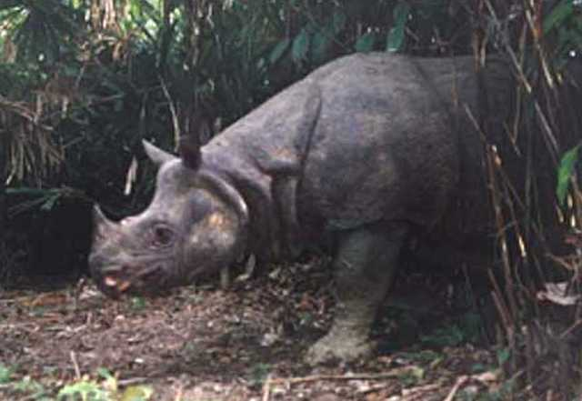 Indonesia Welcomes Two New Javan Rhino Calves and a Rare Hawk-Eagle Chick