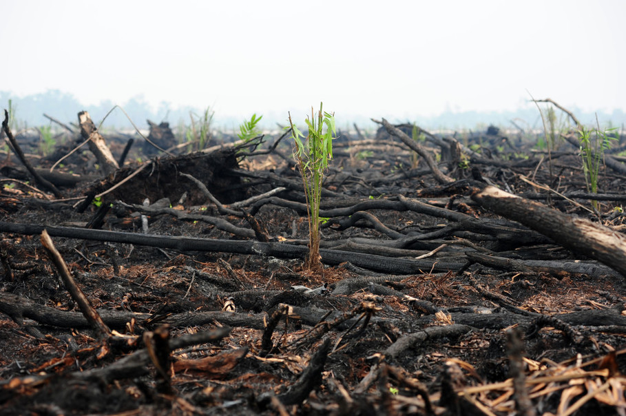 The 2015 fires scorched forests and peatlands in Palangka Raya, Central Kalimantan. (Antara Photo/Jessica Helena Wuysang)
