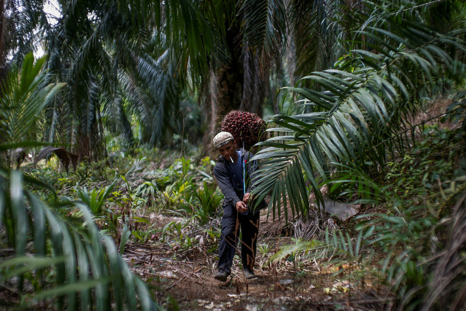 A plantation worker carries oil palm fruits. (Reuters Photo/Samsul Said)