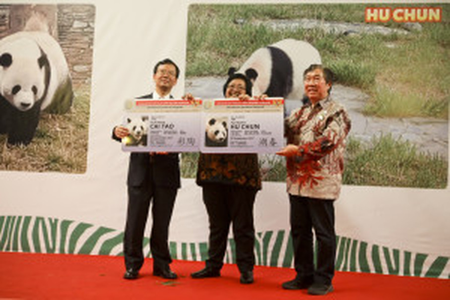 Pandas symbolize peace and friendship. (JG Photo/Yudha Baskoro)