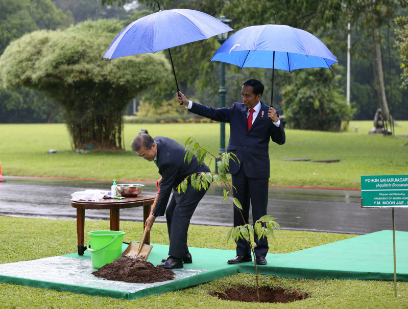 Indonesian President Joko Widodo, right, holds an umbrella for South Korean President Moon Jae-in as the latter plants a tree on the grounds of the Bogor presidential palace. (Reuters Photo/Dita Alangkara)