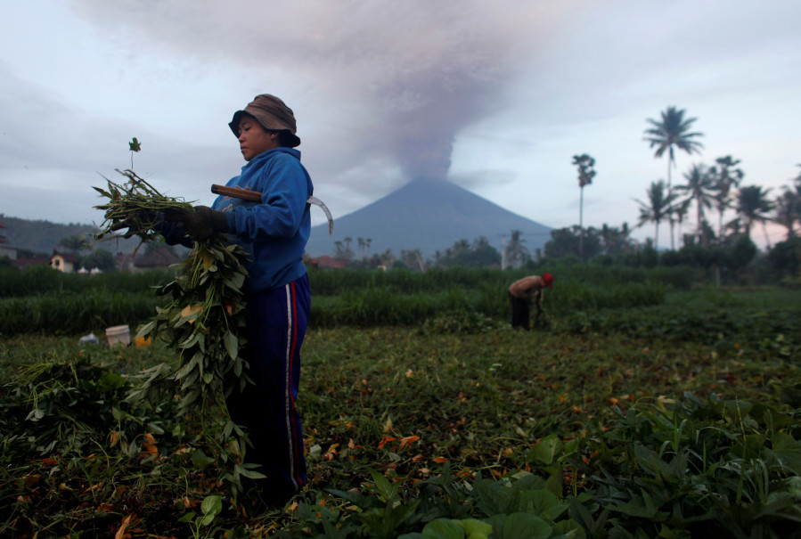 Farmers keep tending their crops in Amed near Karangasem in Bali as Mount Agung erupts in the background on Nov. 27, 2017. (Reuters Photo/Nyimas Laula)