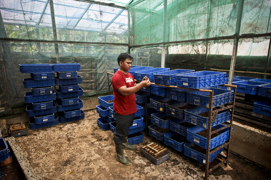 Aminudi checks on the condition of young flies at an incubator in Depok. The mature flies lay their eggs, from which larvae, or maggots emerge to consume the garbage and turn it into compost within two weeks. (JG Photo/Yudha Baskoro)