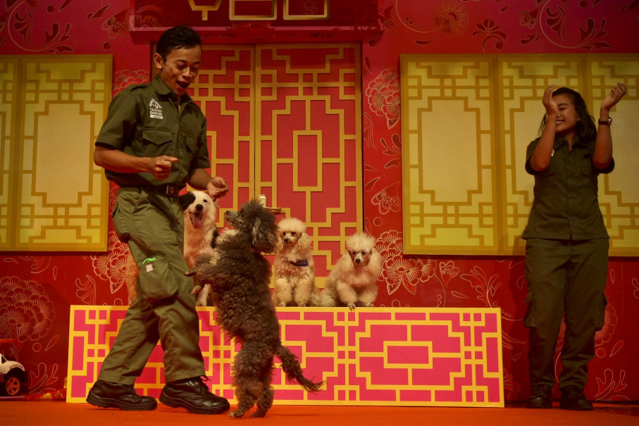 Dog trainers show some tricks during a performance at Ciputra Mall on Friday. (JG Photo/Yudha Baskoro)