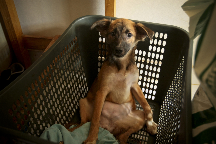 One of Hesti's dogs, named Sweety, has been disabled since birth. (JG Photo / Yudha Baskoro)