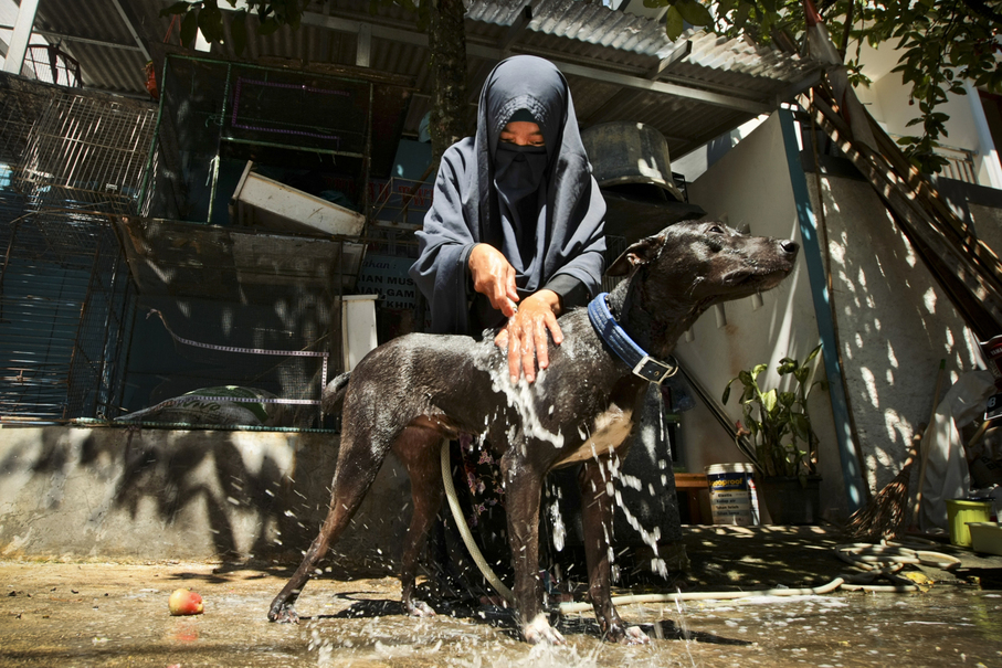 Hesti bathes her dog John in front of her house in South Tangerang. (JG Photo / Yudha Baskoro)