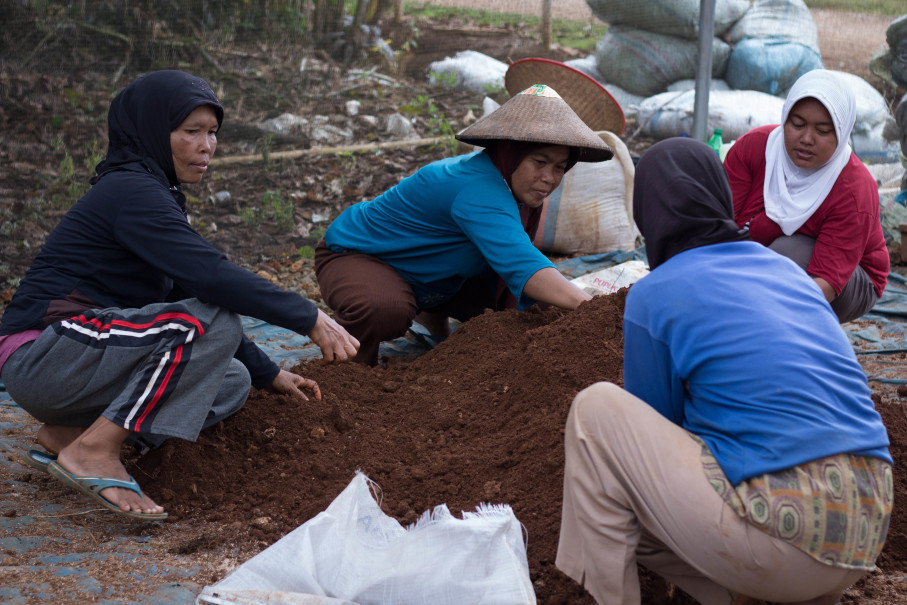 Women working at a cacao nursery in Lampung (Photo courtesy of Barry Callebaut)