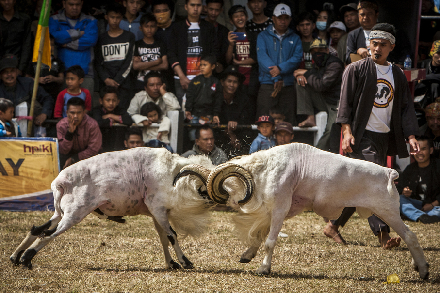 Rams charge in and make an impact. (JG Photo/Yudha Baskoro)