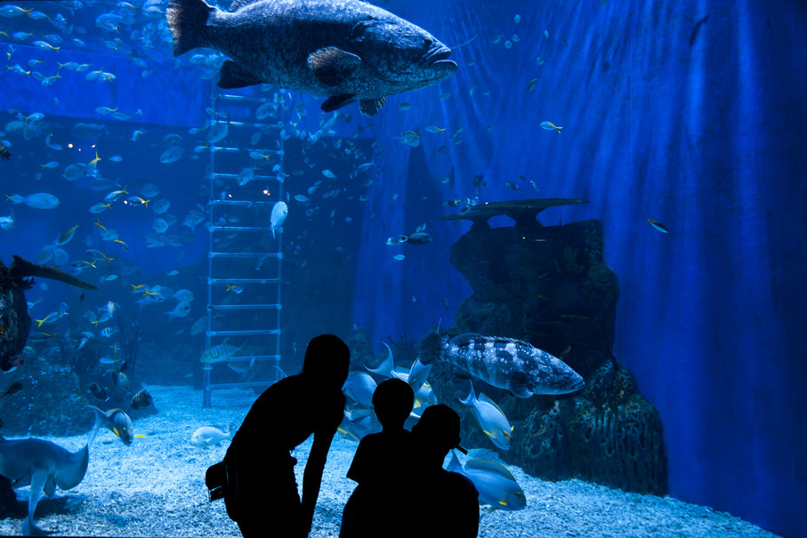The Jakarta Aquarium tries to create ecosystems that match the marine animals' original habitats as closely as possible. (JG Photo/Yudha Baskoro)