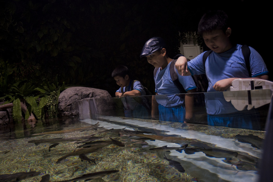 Students interacting with fish in a 'touch pool.' The Jakarta Aquarium encourages visitors to engage with the animals to familiarize themselves with ocean dwellers while raising awareness of the need for conservation. (JG Photo/Yudha Baskoro)