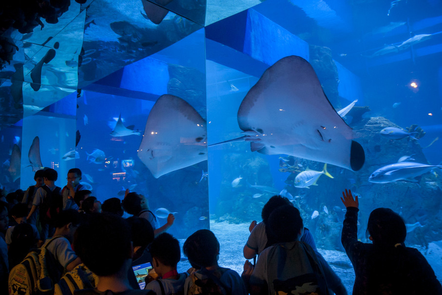 Visitors admiring a giant stingray through reflective glass at the Jakarta Aquarium on Tuesday. (JG Photo/Yudha Baskoro)