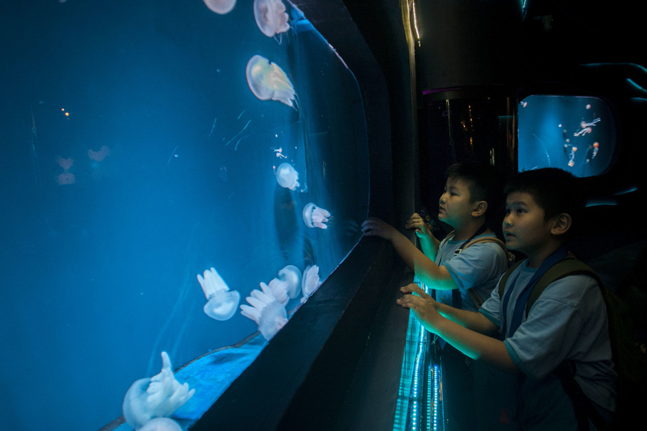 Elementary school students observing jelly fish during an excursion. (JG Photo/Yudha Baskoro)