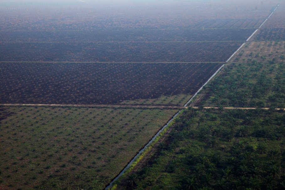 RSPO Aware of Complaint Kalimantan Villagers Filed Against It at OECD