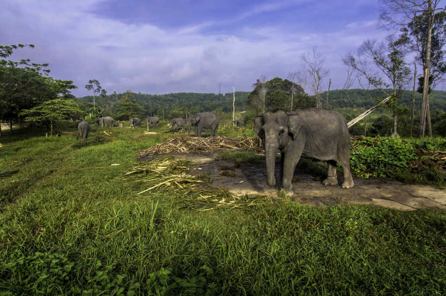 Patrol Elephants Are Helping Their Wild Cousins