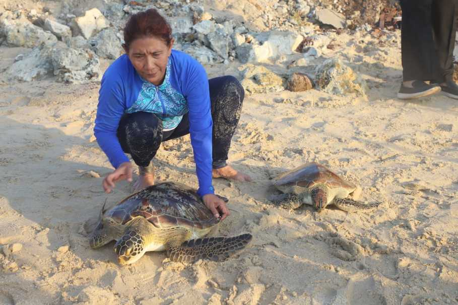 Endangered Green and Hawksbill Turtles Released Back Into the Sea