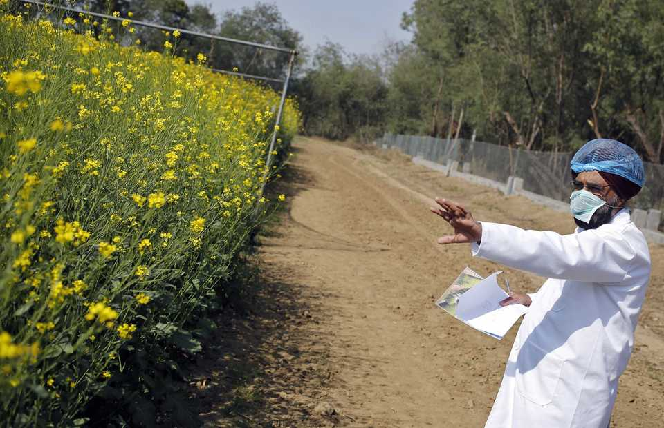 India Develops New Rapeseed Variety to Help Cut Veg Oil Imports