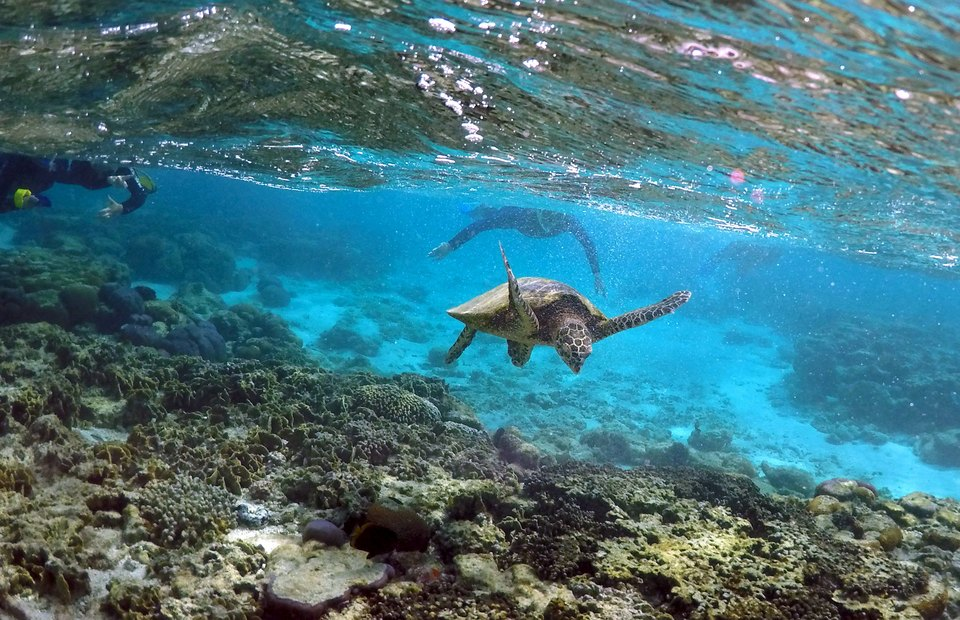 Half Australia S Great Barrier Reef Northern Coral Dead Or