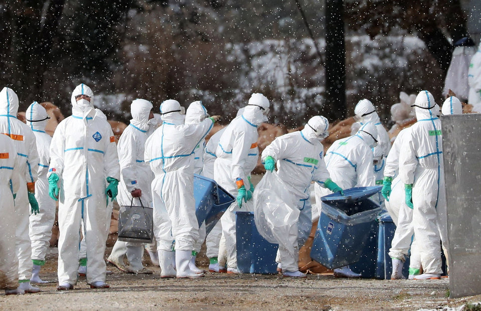 France Finds Bird Flu on Farm in Setback for Exports