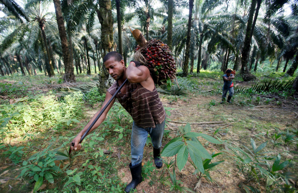 Malaysia Palm Planters Face Labor Shortage as Indonesia