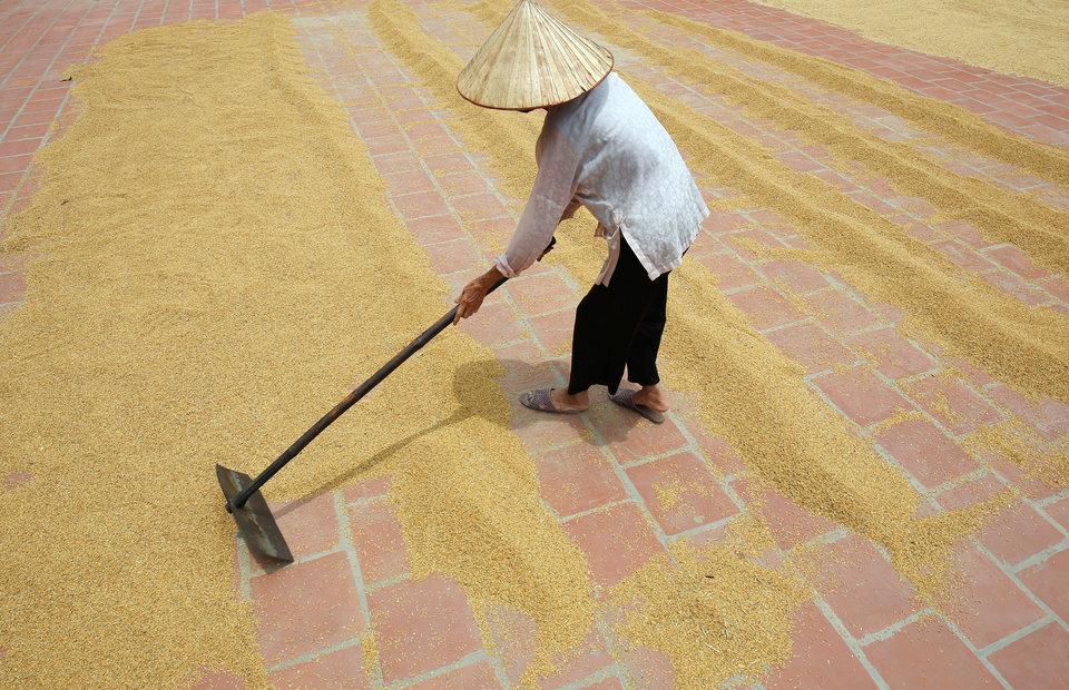 Asia Rice: Strong Demand Helps Prices Extend Gains