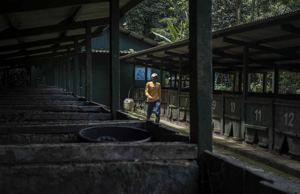 A worker conducts a routine check of the Safari Poo Paper compost facility in Bogor, West Java on Wednesday (27/02) Everyday the facility produces 4000 sheet of paper from two tons of dung. (JG Photo/Yudha Baskoro)