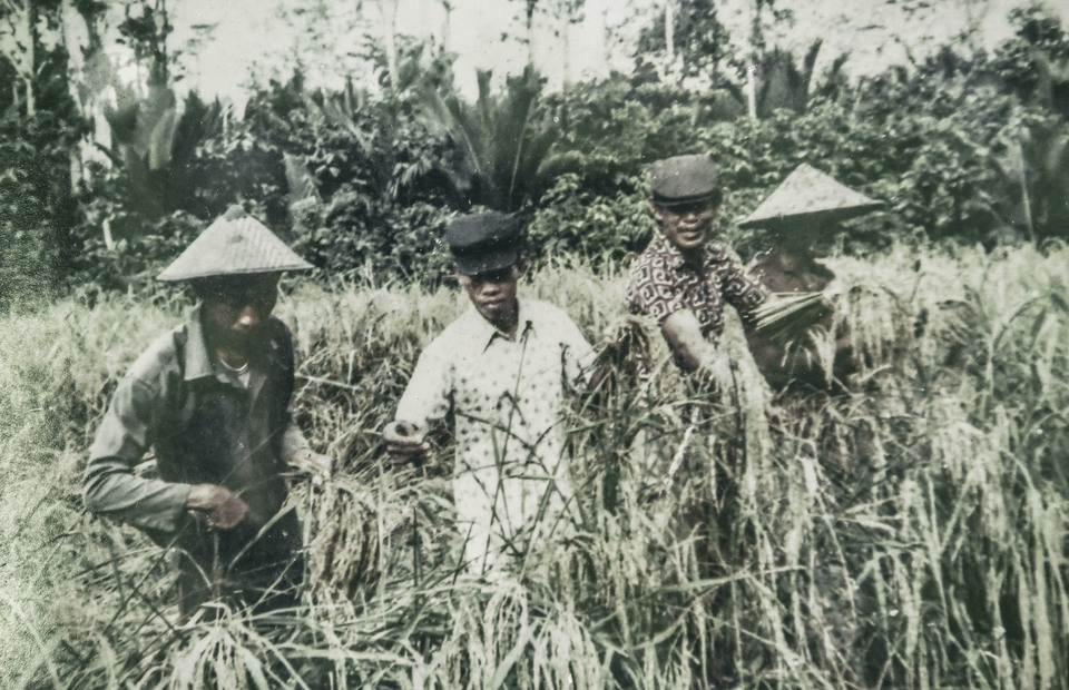 An old picture of forced labour during harvest time in Buru Island, Maluku