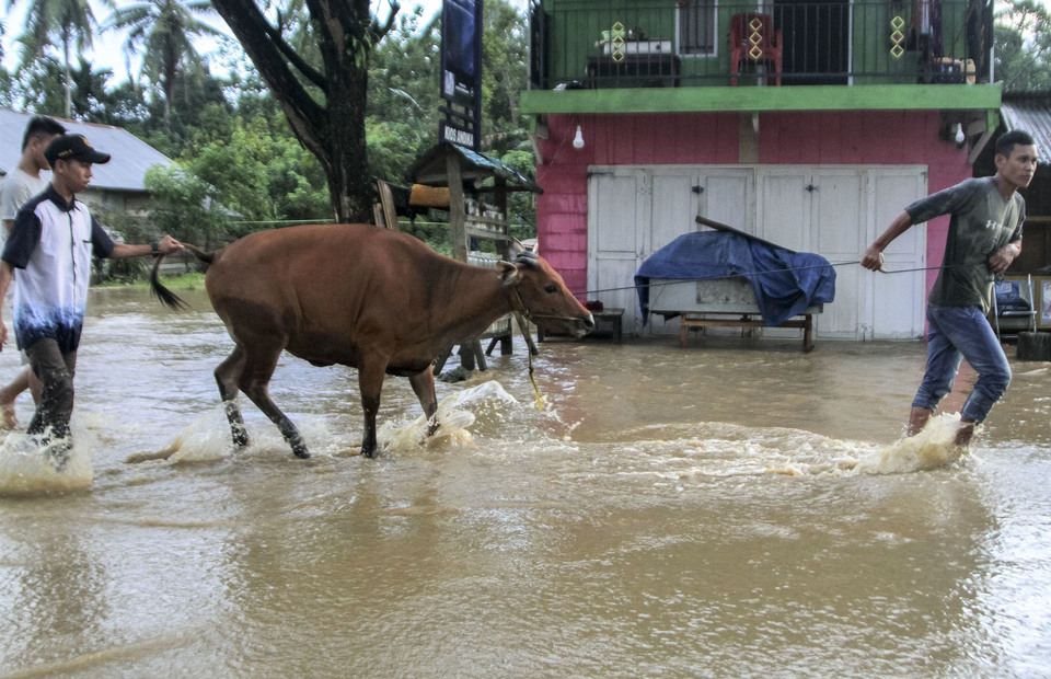 Residents rescued their cattle after being trapped at the location of the flash flood in Anggopiu Village, Konawe, Southeast Sulawesi on Monday (10/06). (Antara Photo/Jojon)