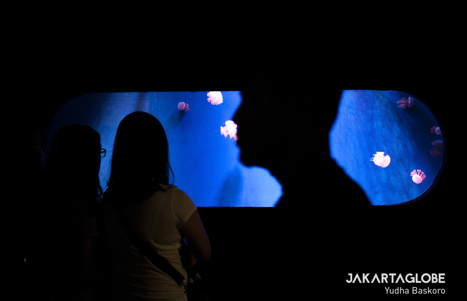 Visitors watch jellyfish in Jakarta Aquarium, West Jakarta on Wednesday (19/06) The aquarium is good for family trip because it is located on a mall (JG Photo/Yudha Baskoro)