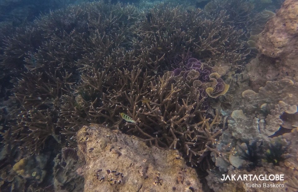 Underwater scenery of Air Island at the Kepulauan Seribu (JG Photo/Yudha Baskoro)