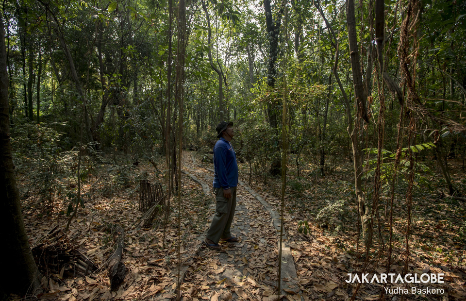 Budi Kusuma Wardana, a forest expert from the Jakarta Natural Resources Conservation Center (BKSDA) during exploration at Rambut Island in Kepulauan Seribu on Sunday (28/07) (JG Photo/Yudha Baskoro)