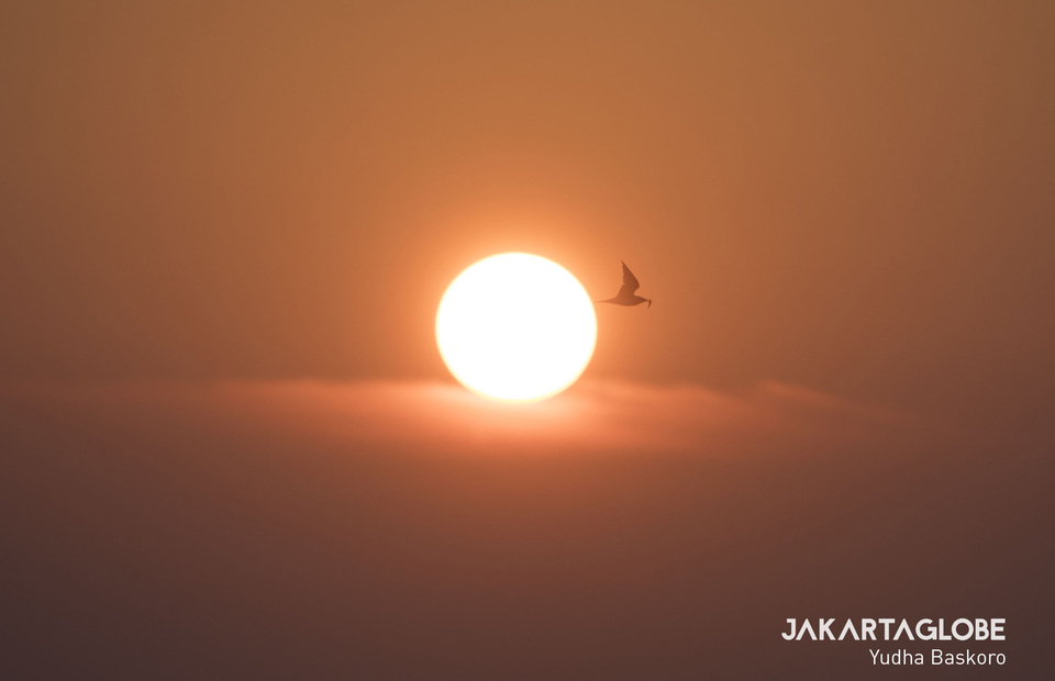 A seagull seen flies through the sunset with fish on its peak at Kepulauan Seribu (JG Photo/Yudha Baskoro)