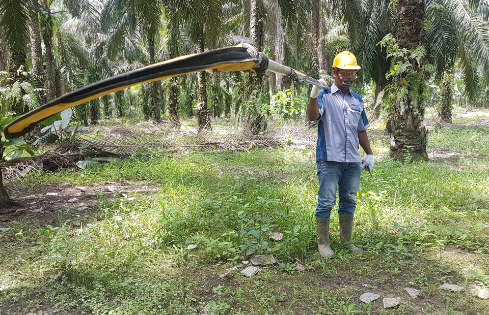 A palm oil farmer with his harvesting tool, at Batang Toru sub-district, South Tapanuli, North Sumatra. (JG Photo/Nur Yasmin)