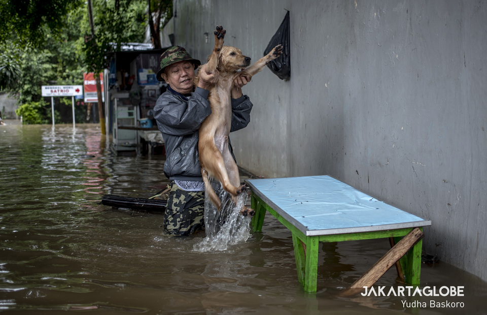 Susanto, 65, lifts his dog Browny and put him on a table during flood. (JG Photo/Yudha Baskoro)