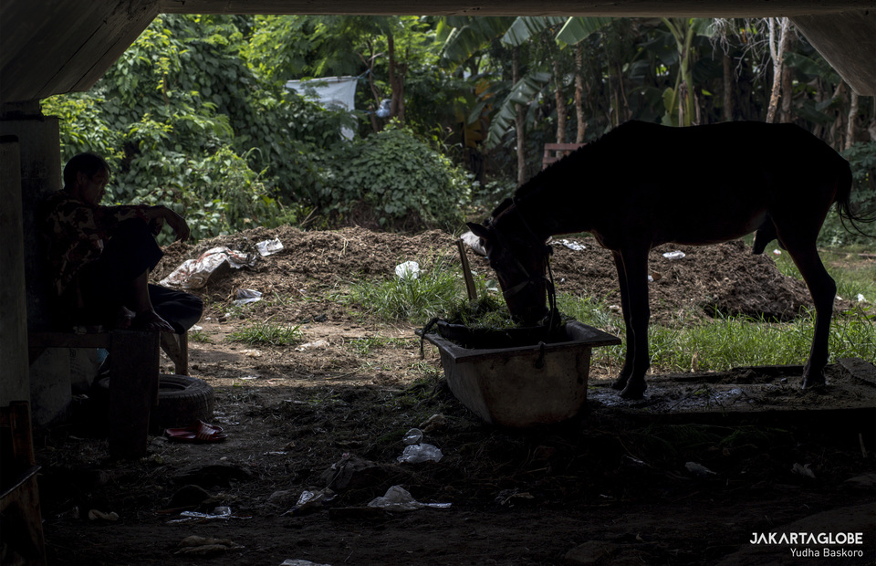A horse-drawn buggy driver feeds his horse under the highway bridge on Monday (11/05). (JG Photo/Yudha Baskoro)