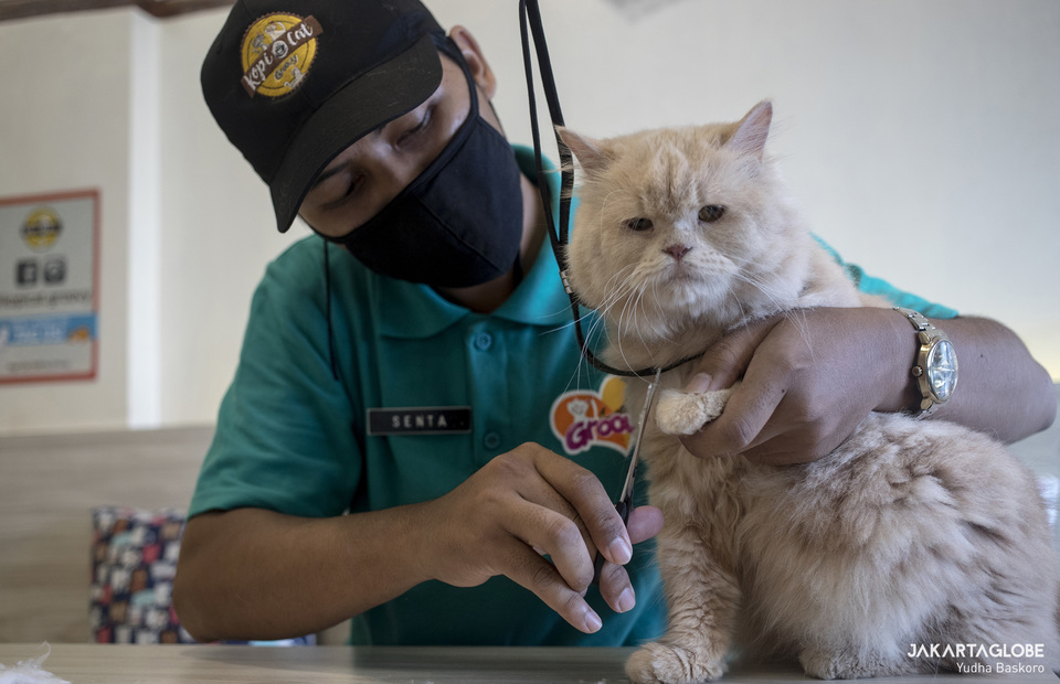A cat caretaker trims the sharp tip of cats nail. (JG Photo/Yudha Baskoro)