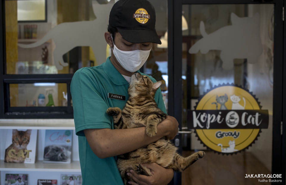 A cat caretaker hugs a bengal cat, so that the cat does not feel lonely since the cafe close and customer cant come. (JG Photo/Yudha Baskoro)