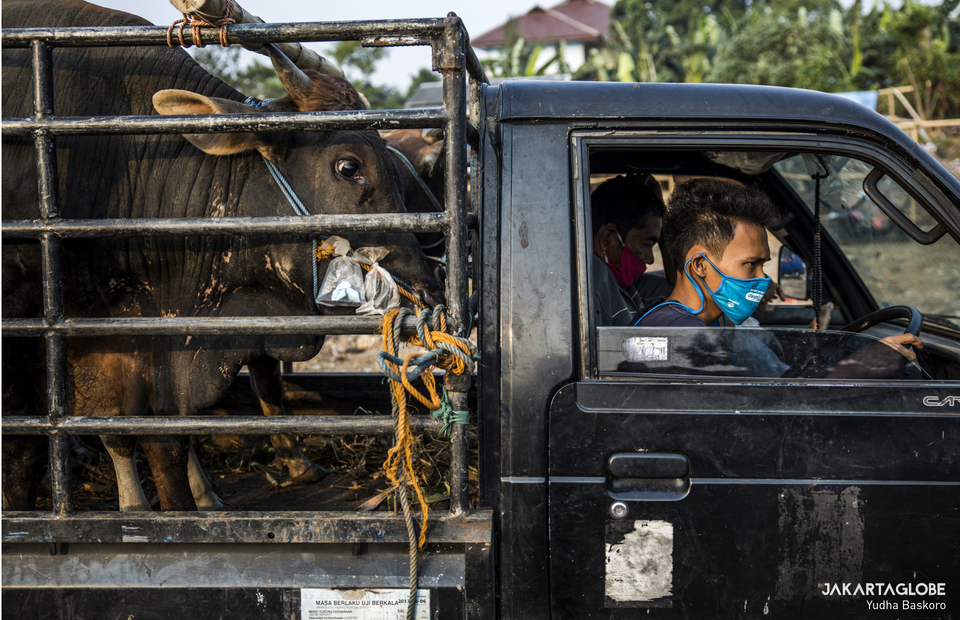 Trader brings a cow with a pickup car at a trading point in Tebet Timur, South Jakarta on Wednesday (29/07). (JG Photo/Yudha Baskoro)