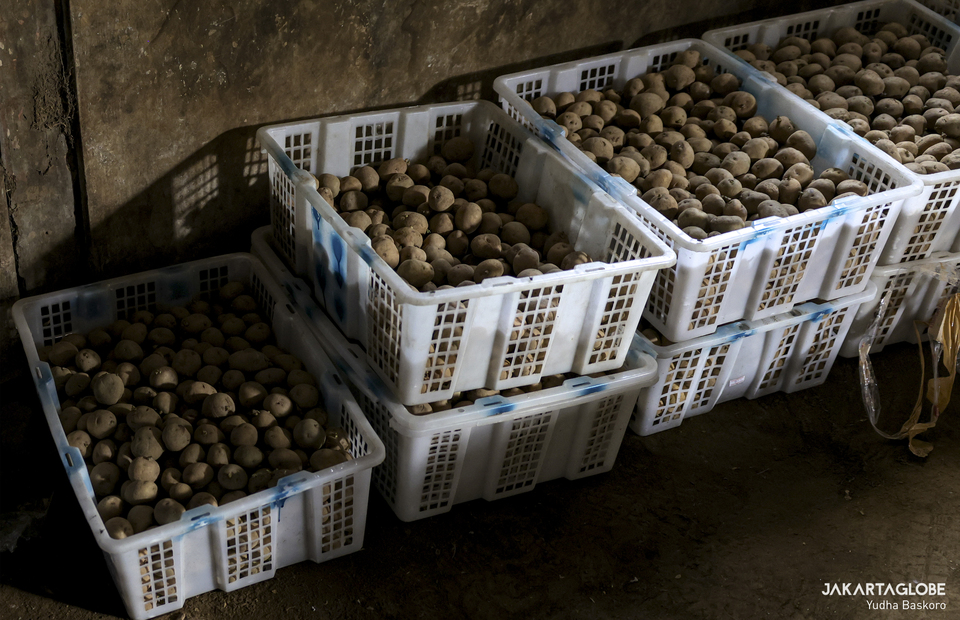 Dieng potatoes are seen inside a pawon at Dieng plateau area in Banjarnegara, Central Java on Sunday (15/11). (JG Photo/Yudha Baskoro)