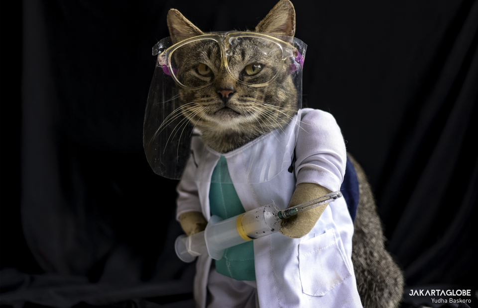 A cat wearing nurse costume at Fredi workshop in Bogor, West Java on Friday (04/12). (JG Photo/Yudha Baskoro)
