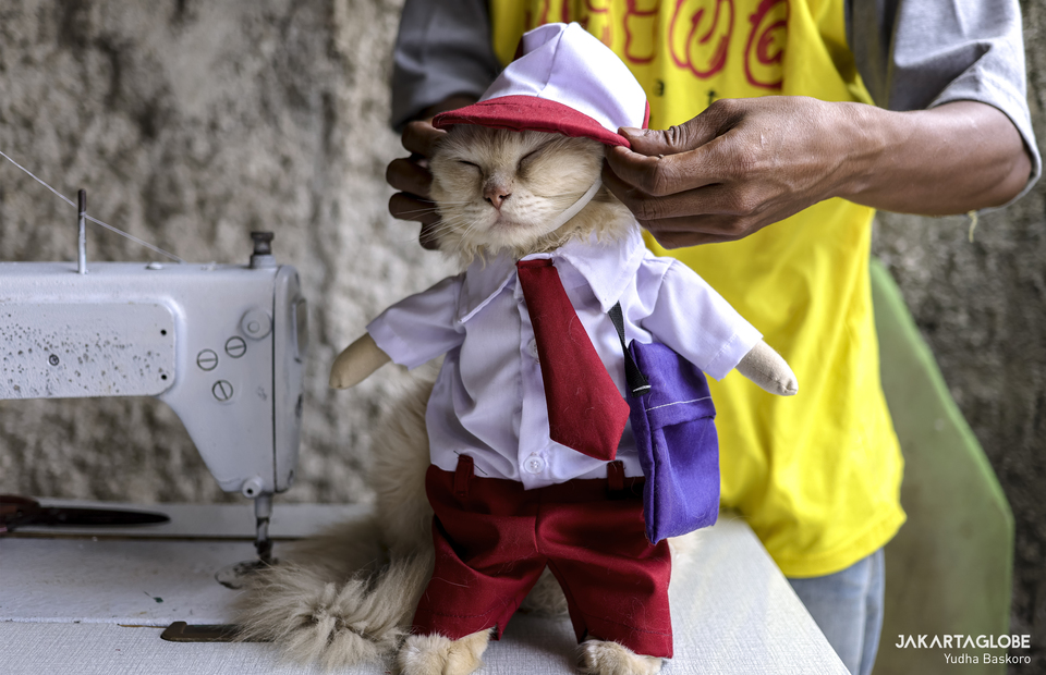 A cat wearing school children costume at Bogor, West Java on Friday (04/12). (JG Photo/Yudha Baskoro)