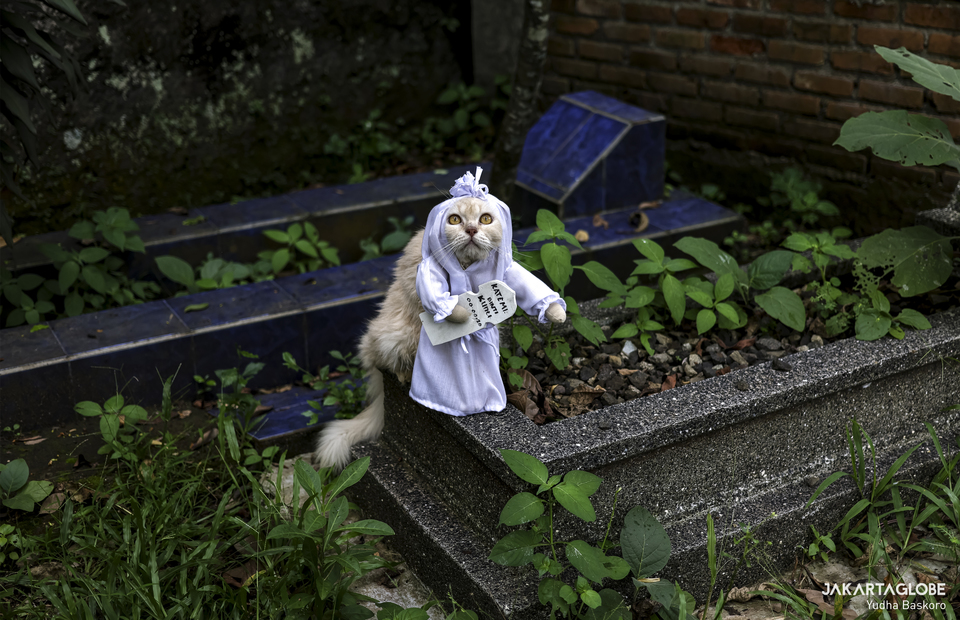 A cat wearing pocong (Indonesian local ghost) costume in a graveyard near Fredi workshop at Bogor, West Java on Friday (04/12). (JG Photo/Yudha Baskoro)
