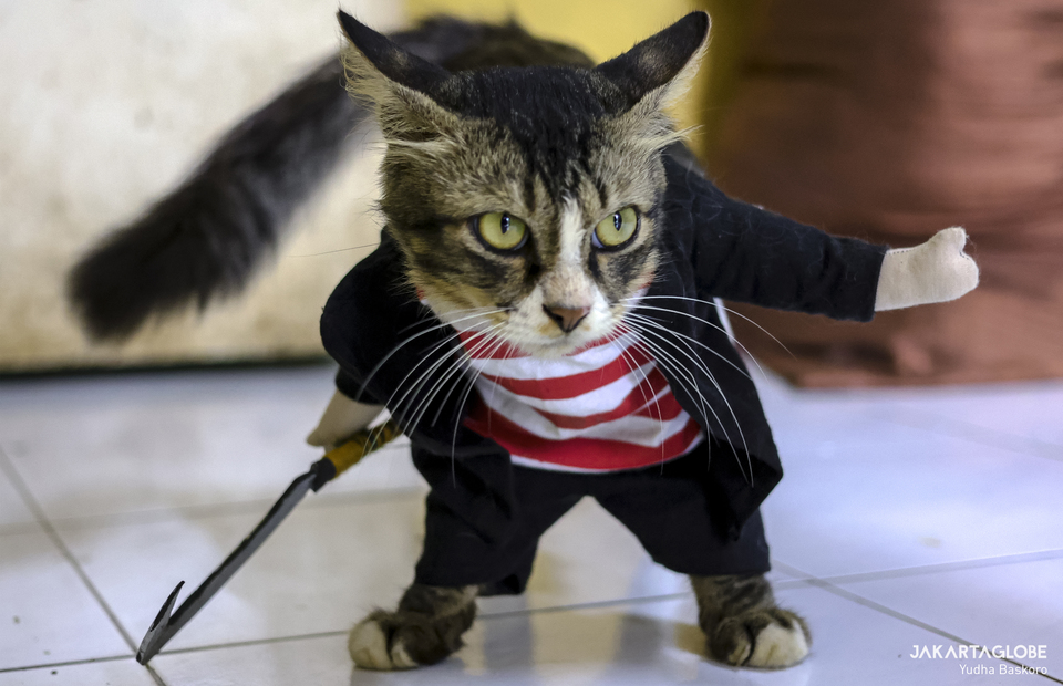 A cat wearing madurese traditional attire in Fredi workshop at Bogor, West Java on Friday (04/12). (JG Photo/Yudha Baskoro)