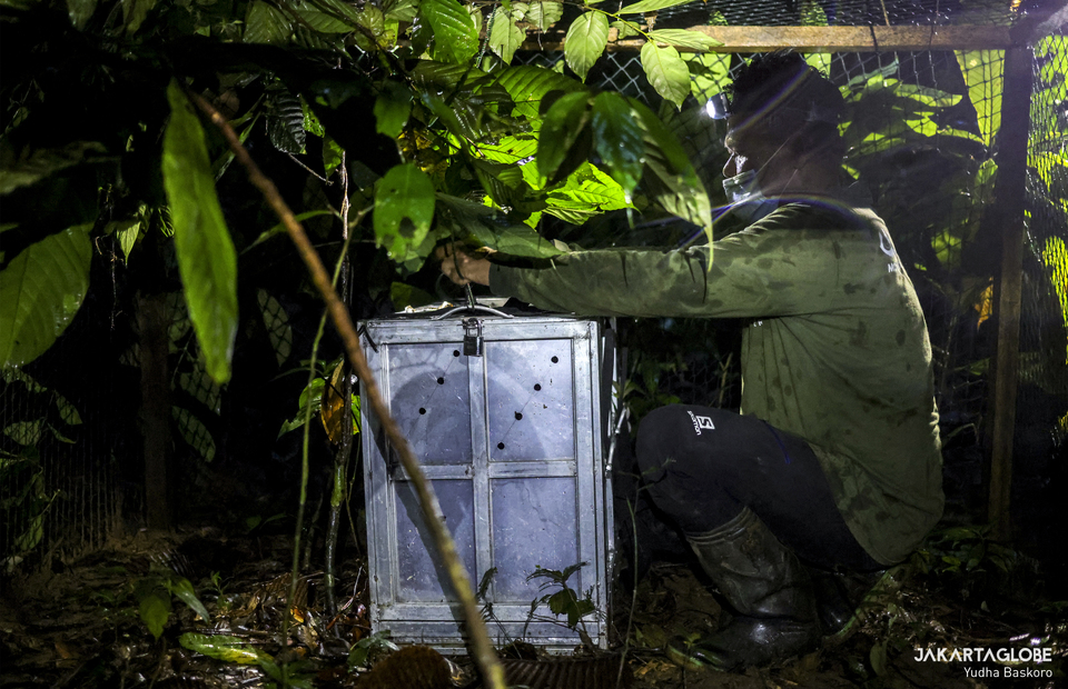 International Animal Rescue staff checks the habituation cage at Bukit Barisan Selatan National Park in Lampung, on Wednesday (09/12). (JG Photo/Yudha Baskoro)
