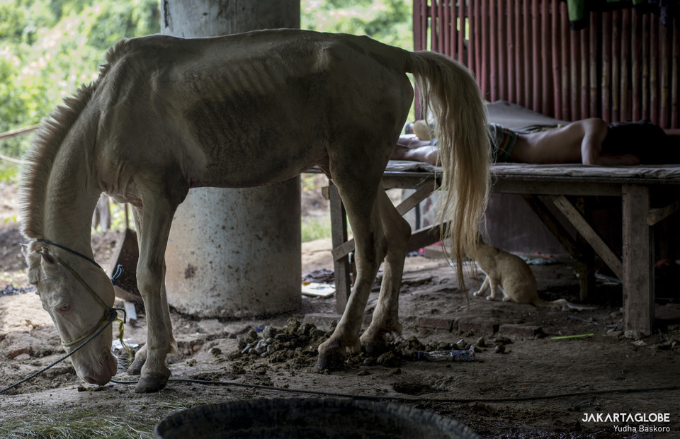 A buggy horse takes shelter under a highway bridge in Sungai Bambu, North Jakarta, on May 11, 2020. Horse-drawn buggies that used to carry tourists around the National Monument in Central Jakarta have been banned since three months ago as the city went into semi-lockdown to limit the spread of coronavirus. It turns out many of them, along with the buggies and even their owners, have been taking shelter under a highway bridge near Sungai Bambu in North Jakarta.(JG Photo/Yudha Baskoro)