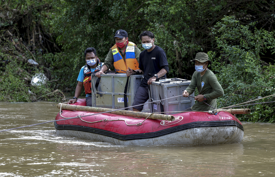 Animal rescue staff ride a rubber boat to cross the Pemerihan River in Lampung on Dec 8. The West Java Natural Resources Conservation Agency (BKSDA Jawa Barat) and the Balai Besar Bukit Barisan Selatan National Park (TNBBS) have released two Asian golden cats (Catopuma temminckii) back into the wild in the Bukit Barisan Selatan National Park conservation forest in Lampung, the southern tip of the island of Sumatra, on Dec 9 following their rescue from illegal traders.  (JG Photo/Yudha Baskoro)